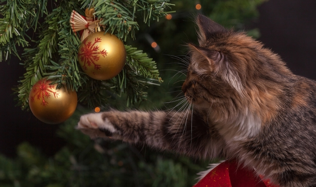 Image of cat batting a Christmas tree ornament