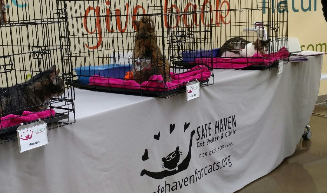 Volunteer Foster Application Safe Haven For Cats