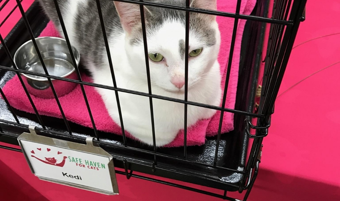 Image of White Cat at PetPeople In Carrier Waiting for Forever Family