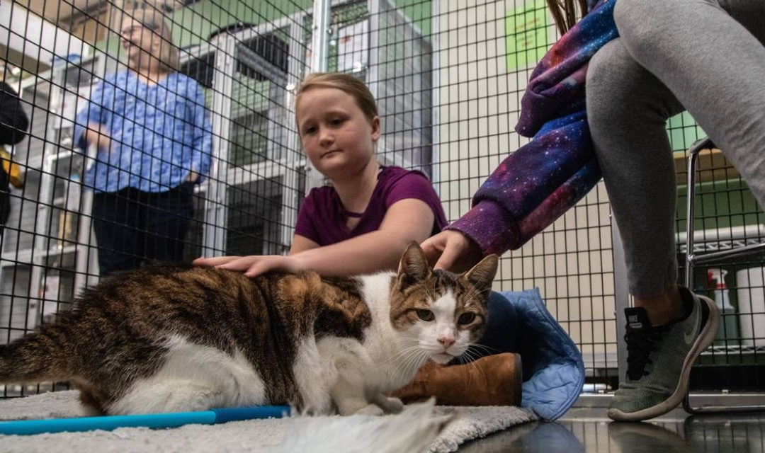 News & Observer Features Our Kitties For Christmas