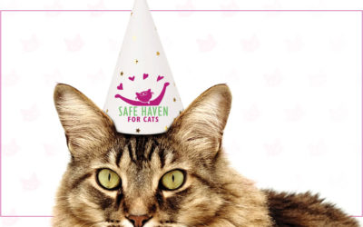 Today – Adopt a cat for $20.19