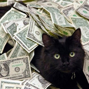 Cat with cash