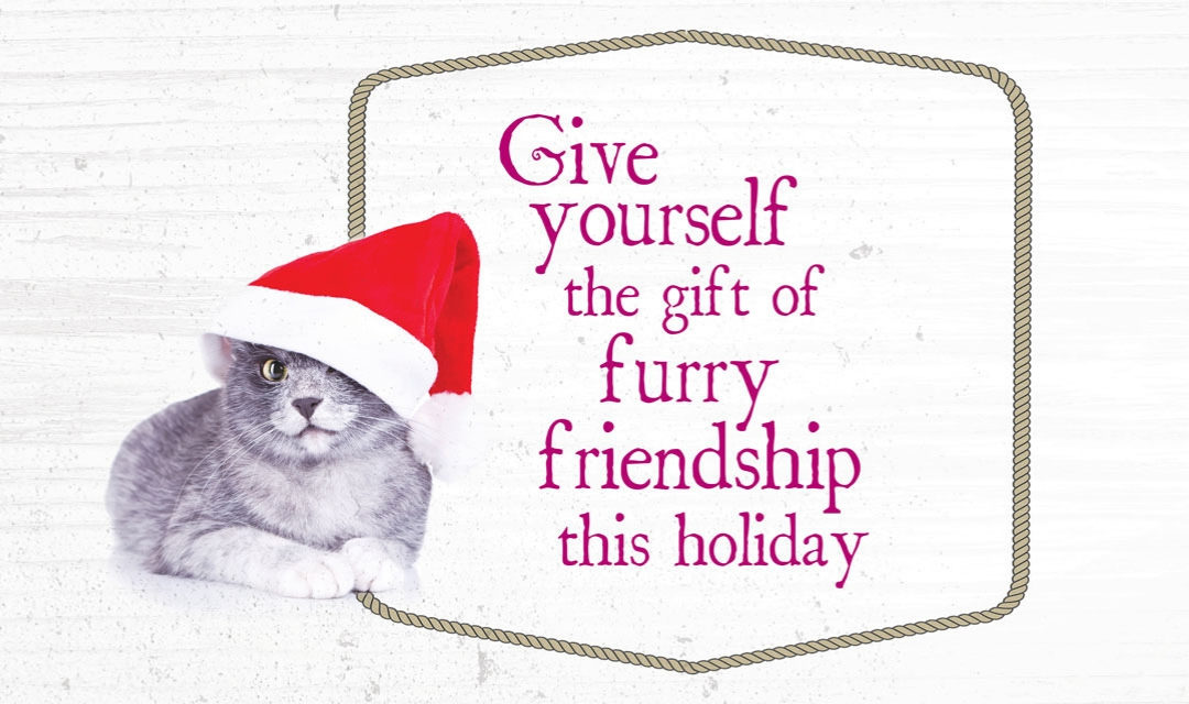 All Our Kitties Want for Christmas Is YOU!