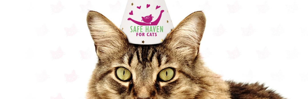 Image of Tabby Cat with Party Hat Featuring the SAFE Haven Logo Looking at Camera