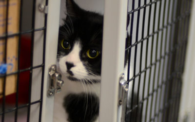Shelter Closing Early – 1/27/19