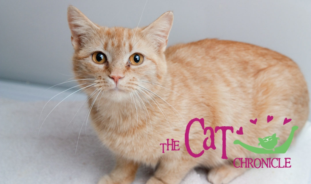 The Cat Chronicle – January 2019