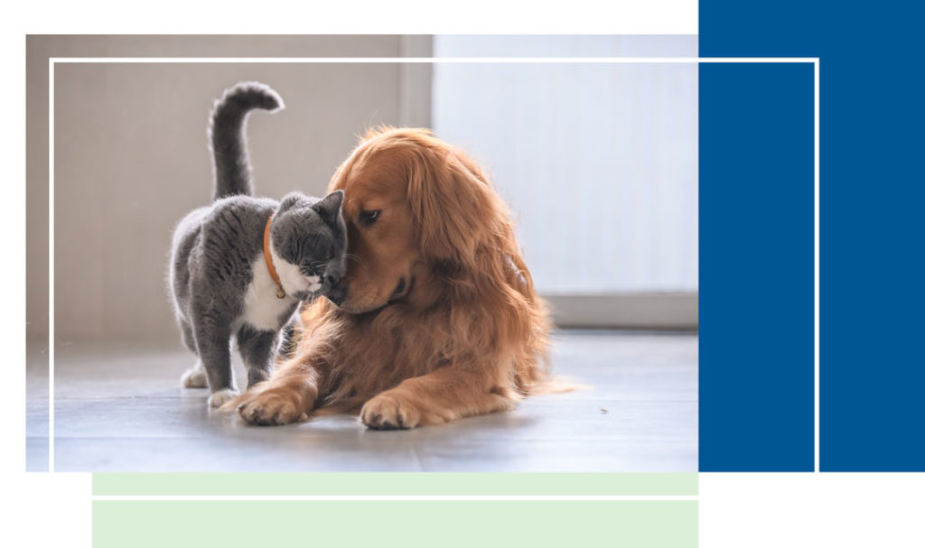 Dog and Cat Touching Foreheads