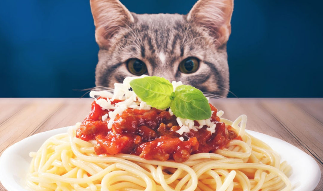 Two Weeks Until Spay-ghetti & No Balls Dinner! – SOLD OUT