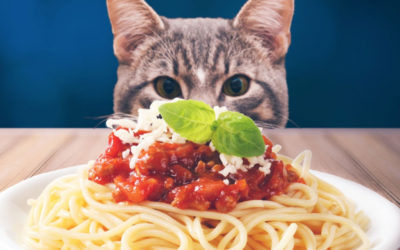Spay-ghetti & No Balls Dinner – SOLD OUT