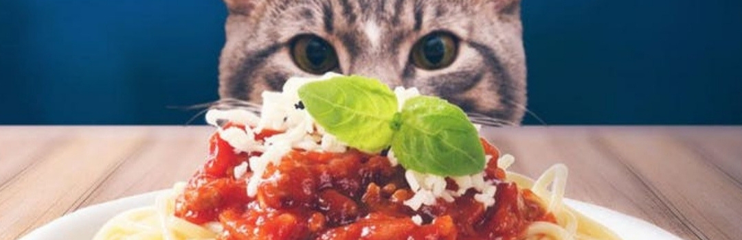 Cat Staring at Plate of Spaghetti
