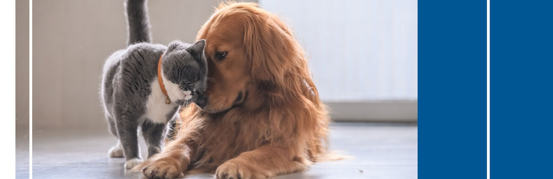 Dog and Cat With Foreheads Together