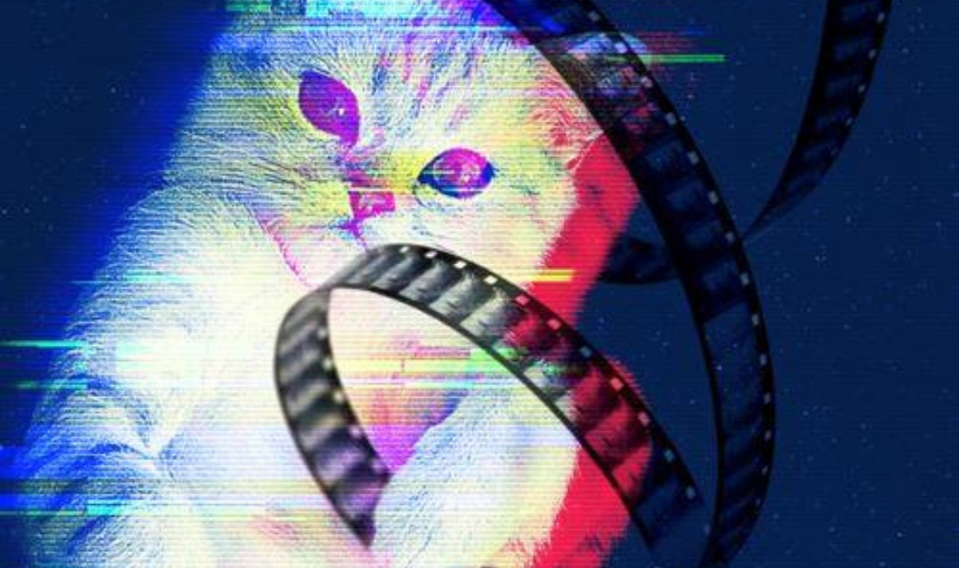 CatVideoFest Banner - Cat With Film Strip Wrapped Around Wrist