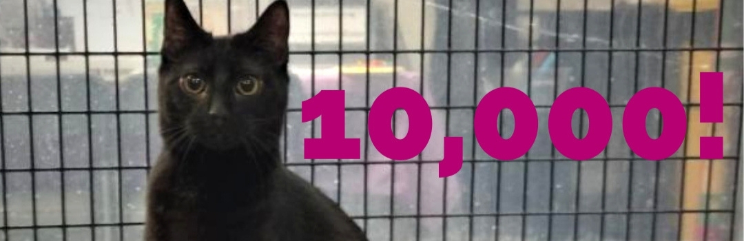 Picture of Black Cat With Pink Text - 10,000!