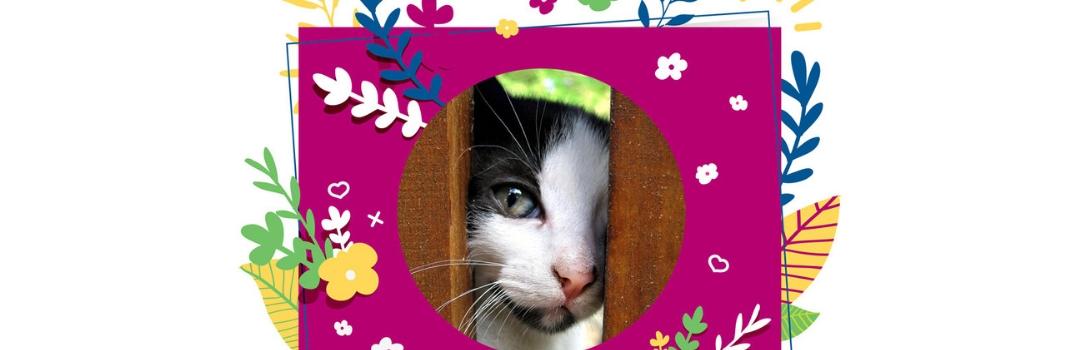 Spring Into Action - Cat Peering Through Door