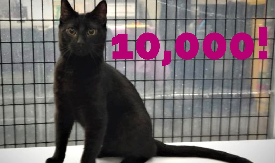 Black Cat With Number 10,000