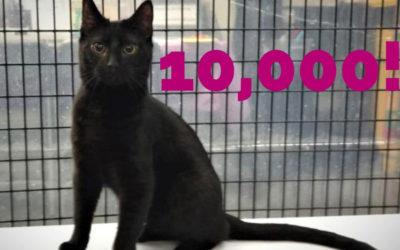 10,000 Cats Adopted!