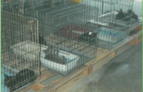 Cats in Garage