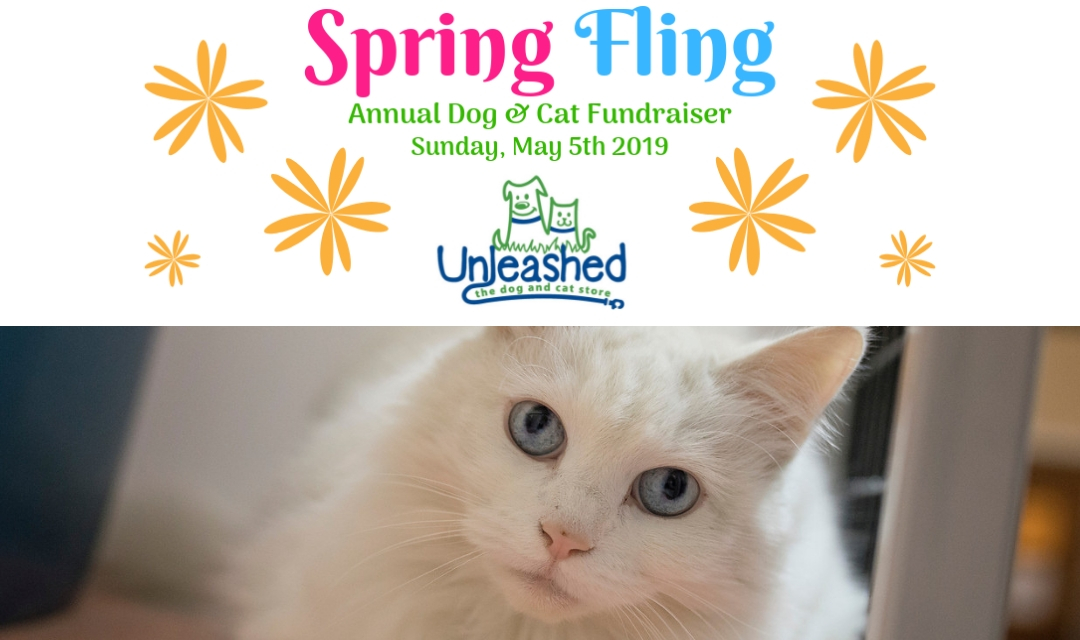 Spring Fling Logo With White Cat