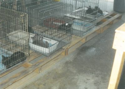 1994 - First 4 Cats and Cages in the Garage