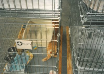 1995 - Rusty in Garage Shelter