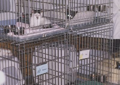 1998 - Kitty Cats in Garage Shelter
