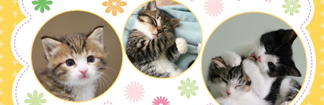 Three Circles With Images Of Kittens