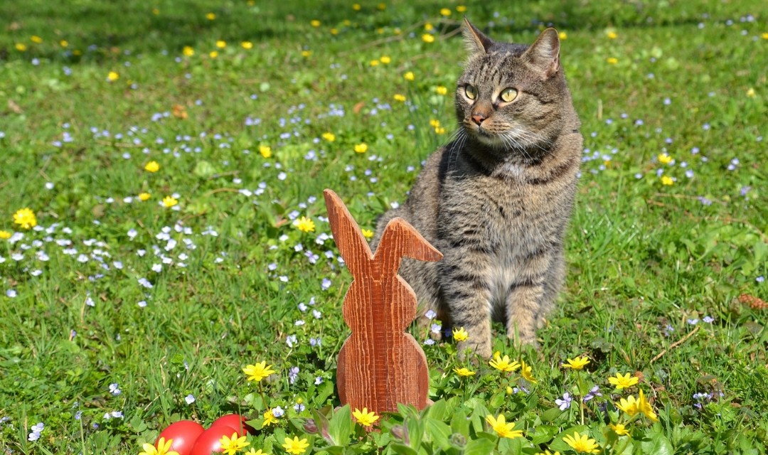 Tabby Cat in Wildflower Field With a Wooden Cut Out of a Rabbit