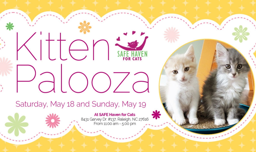 Image of Two Kittens With Text Reading Kitten Palooza - Saturday May 18 and Sunday May 19