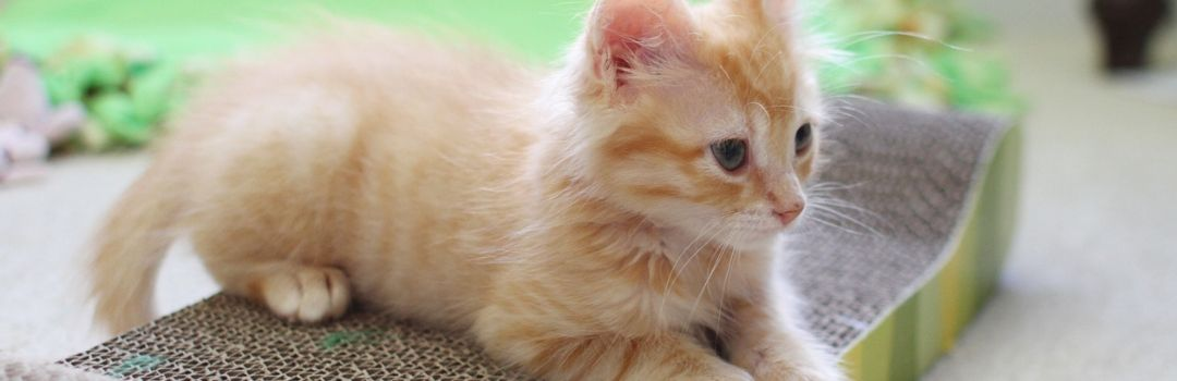Picture from Side of Small Orange Kitten Sitting On Scratch Pad