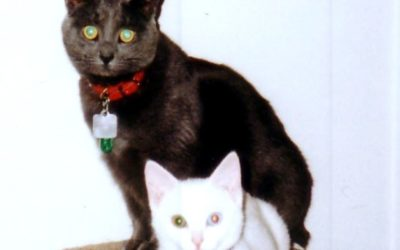 Our SAFE Haven Cat Family – Grace, Samantha, Connie, Barbie, Whitney, Bella and Kelly