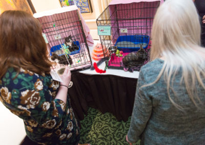 2019 Tuxedo Cat Ball 163 The Feline Participants