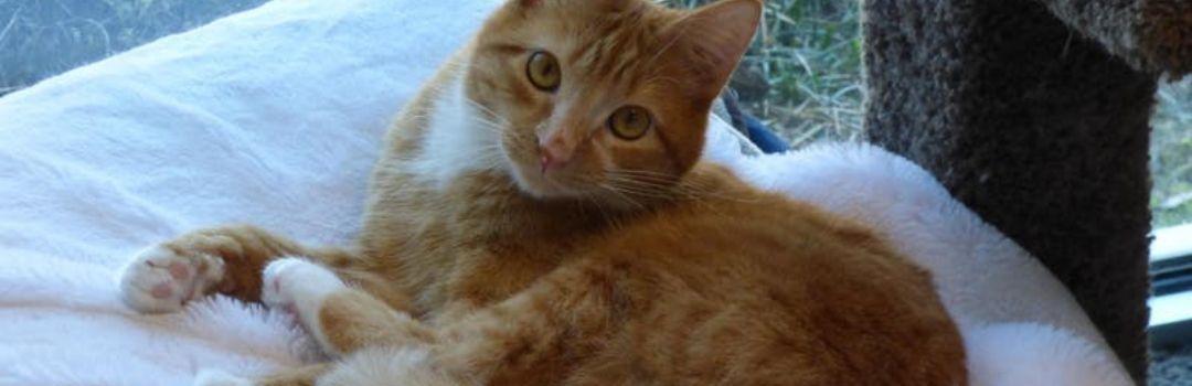 Orange Cat Looking Back At Camera