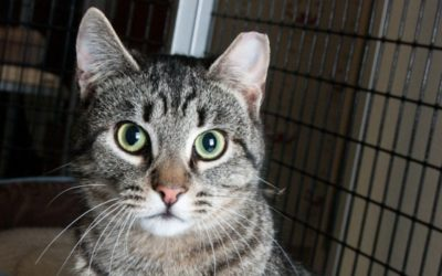 Do You Know How To Help Community Cats?