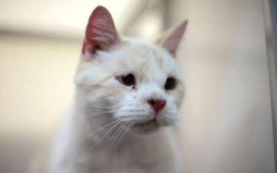 Do You Know What Your Aging Cat Needs?