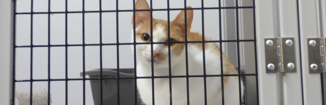 Photo of Orange and White Cat in Cage