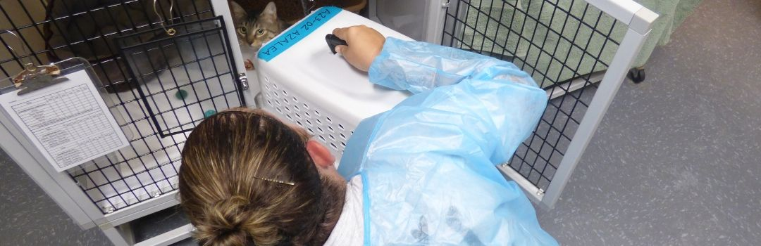 Staff Member Transferring Cat From Carrier to Cage