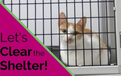 The Countdown is On – Let's Clear the Shelter!