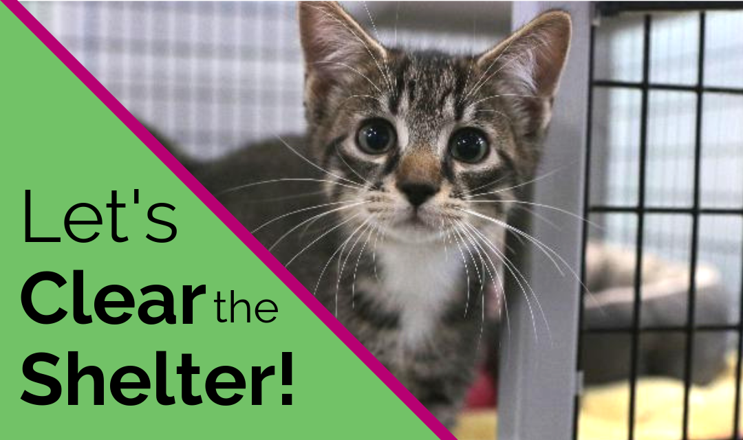 What to Expect at Clear the Shelters