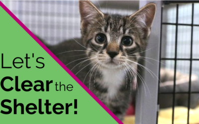 TOMORROW – We're Clearing the Shelters!😺