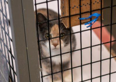 SAFE Haven for Cats 2018 5k MK54