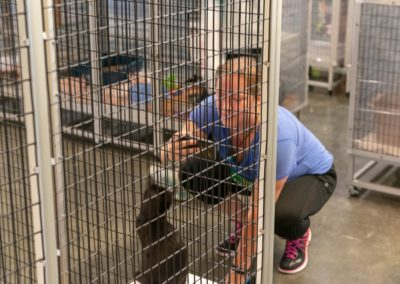 SAFE Haven for Cats 2018 5k MK60