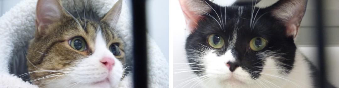 Kitties from North Myrtle Beach