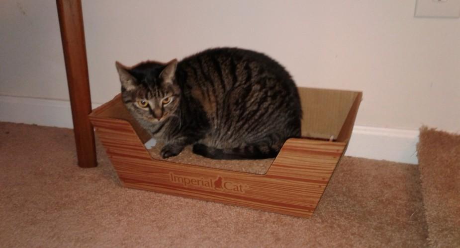 Mimi in her scratcher-bed