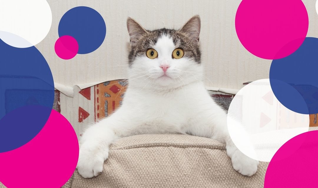 Clinic News: Help Your Cat Go Nut Free in November