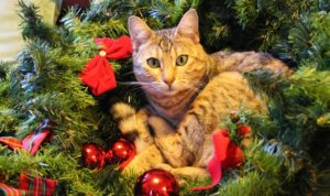 Tabby Cat In A Christmas Tree