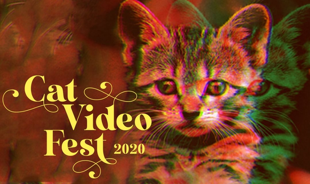 70 Minutes of Cat Videos for Good!
