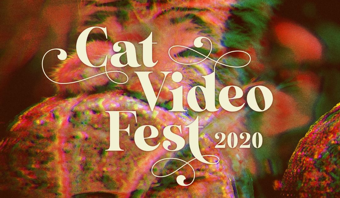 Text Reads Cat Video Fest 2020