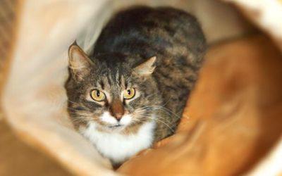 Clinic News: Healthy Cats Live Longer!
