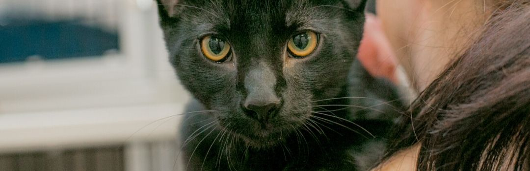 Black Cat with Yellow Eyes looking Over Human's Shoulder