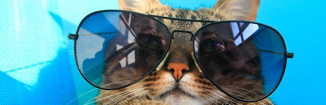 Cat wearing Large Sunglasses